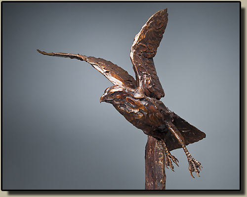 Bronze flying Redtailed Hawk